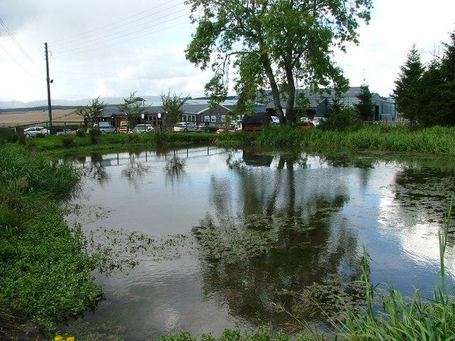Duck pond at Gloagburn Farm