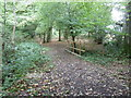 TQ3618 : Bridleway bridge in Great Home Wood by Dave Spicer