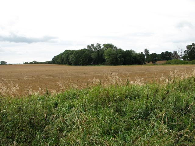 View across harvested field towards Conduit Plantation, Middleton
