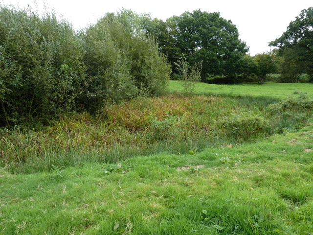 Overgrown pond in Redgate field
