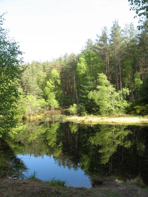 Longhowe Loch, near White Ash Hill Wood