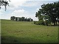 SP2481 : Copse on a low hillside  by Robin Stott