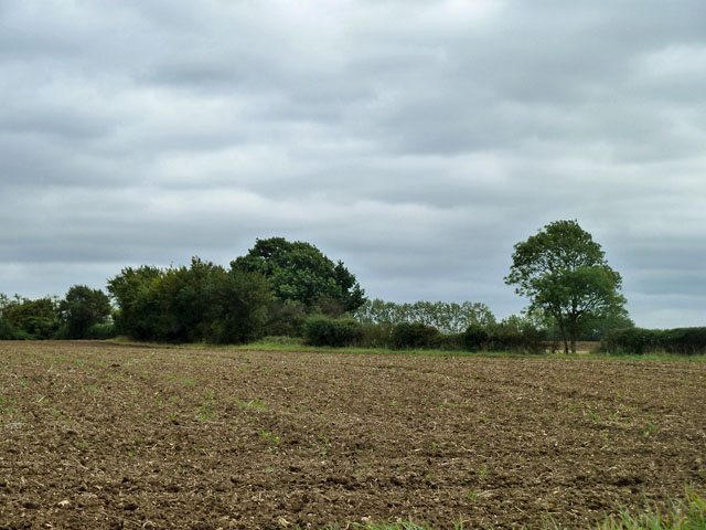 Ploughed and harrowed field