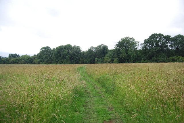 Footpath across a grassy meadow