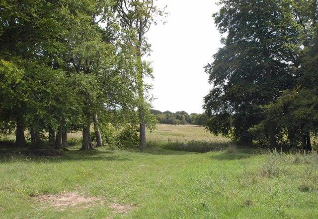 Vista between trees, Marden Down