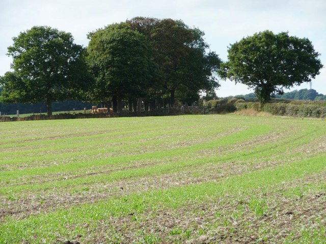 Trees alongside Upper Field Lane