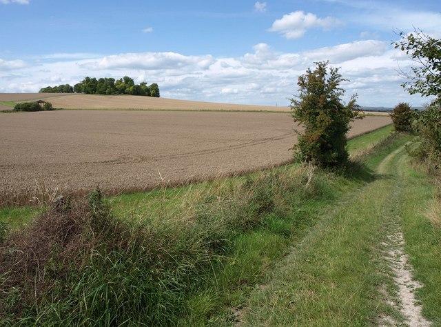 Bridleway to Marden