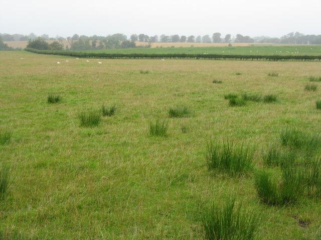 Rushy pasture at Broadhead