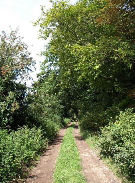 Bridleway near Marden