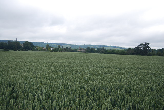 Large wheat field near Birling