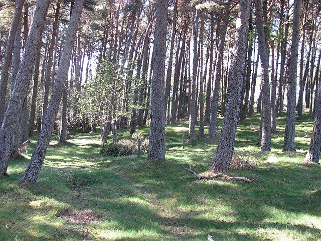 Woodland, Dalwhinnie
