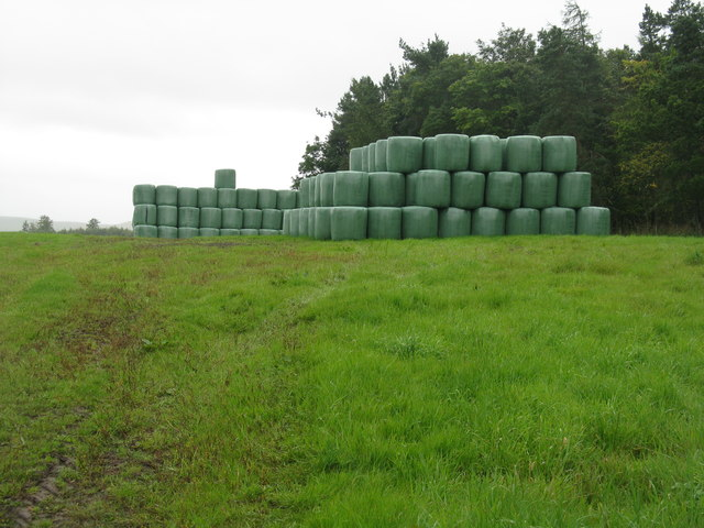 Silage bales by Pikeham Wood