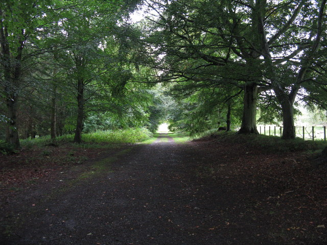 The Beech Avenue at Arniston