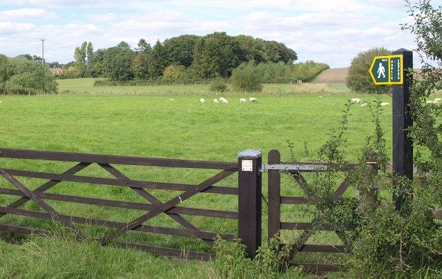 Meadow near Patney