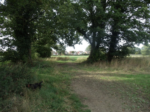 Footpath between the trees at the rear of Ackworth House