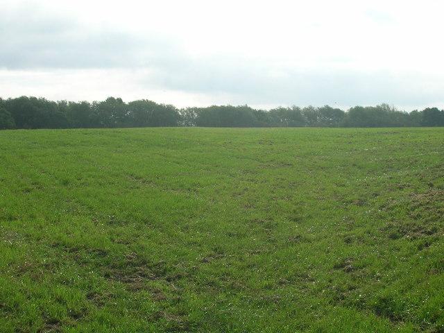 Farmland, Bentley Common