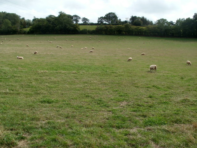 Sheep grazing in a field adjacent to Pontrilas signal box