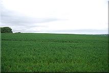 TQ1913 : Wheat field by N Chadwick