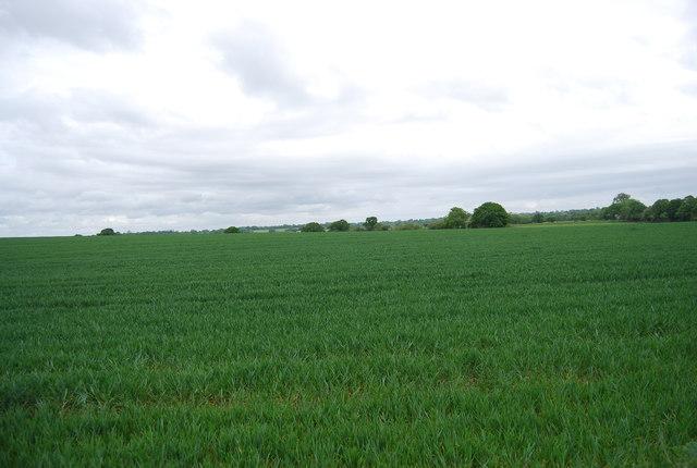 Farmland by the Downs Link