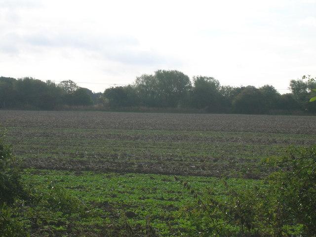 Farmland off Arksey Common Lane