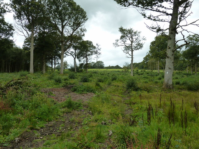 Woodland clearance in Eels Ash Wood