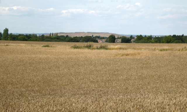 Wheatfield southeast of Meriden
