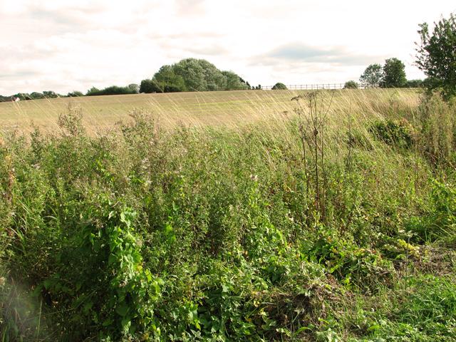 Stubble field east of Brown's Lane, Holme Hale