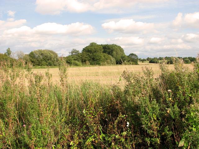 Fields east of Brown's Lane, Holme Hale