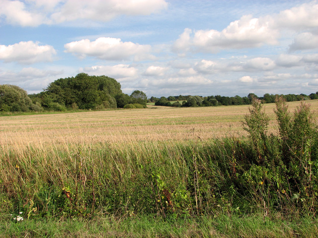 Harvested field east of Brown's Lane, Holme Hale