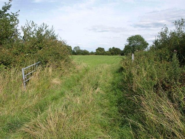 Gate into field near Marsh Farm