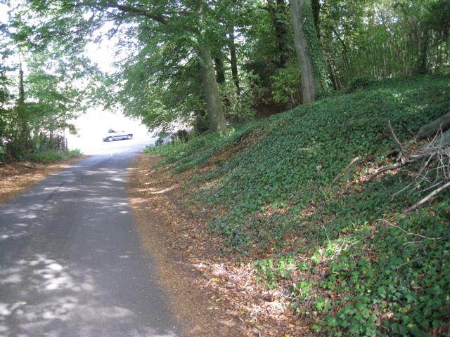 Ivy-clad bank, Church Lane