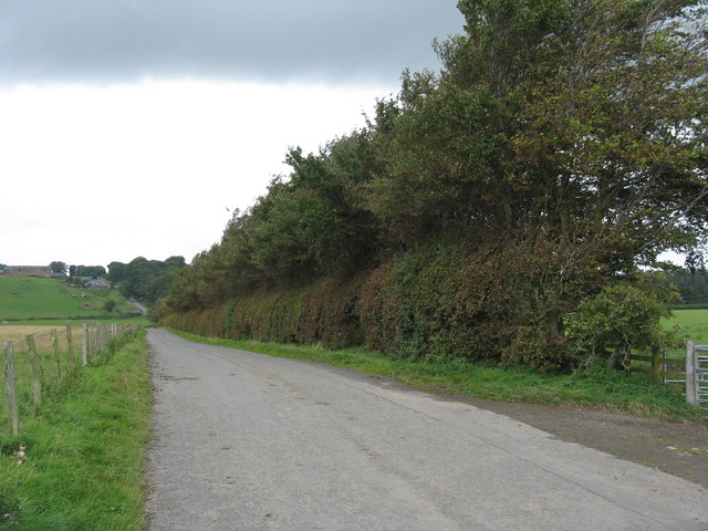 The road to Wester Middleton