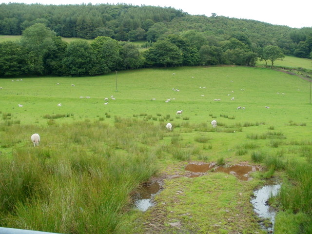 Sheep grazing in the Treweryn valley