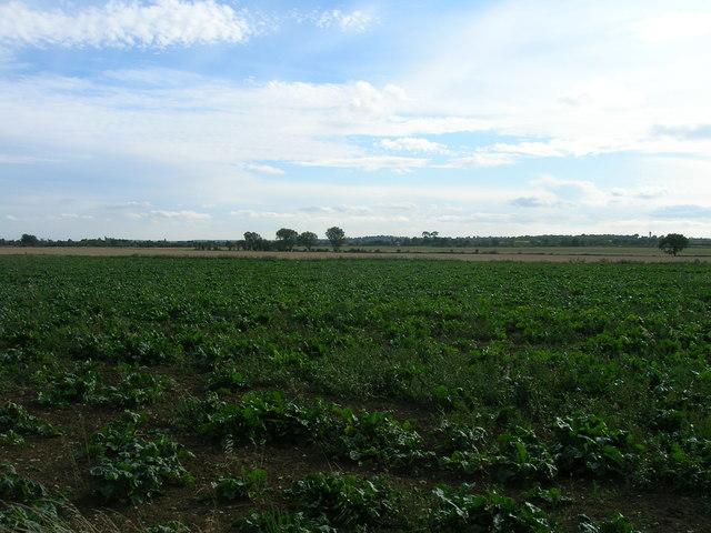Farmland, Toll Bar