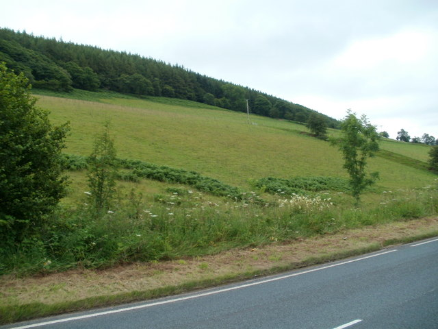 Ground sloping up to woodland south of  Defynnog