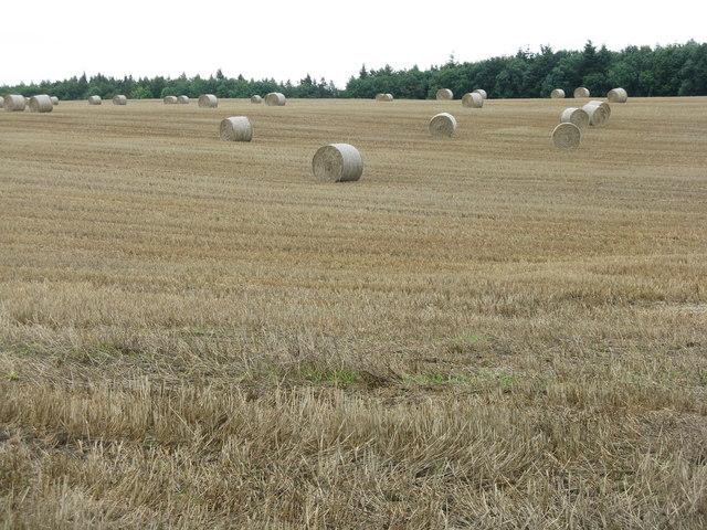 Barley stubble and big bales near Castleton