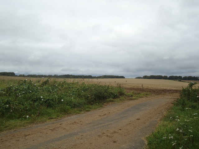 Field near to A303 near Chicklade