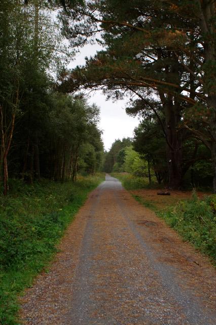 Track, Newborough Forest