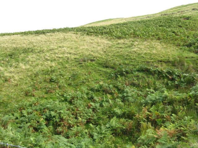 Bracken and Grass covered hillside