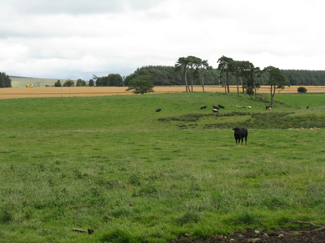 Pasture and oats near Middleton Moor