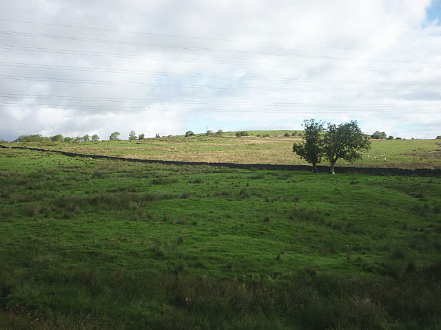 Pasture by Painsdale Burn