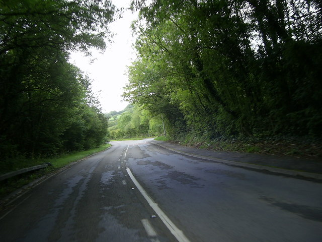 Tree-lined road to Porthyrhyd