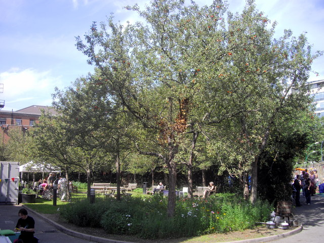 Garden at rear of Tate Britain