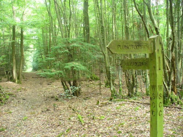 Footpath Through Hog Wood