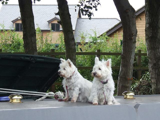 Narrowboat guard dogs near Great Haywood, Staffordshire