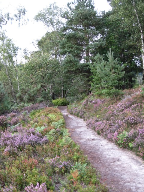 Greensand Way crossing Hindhead Common