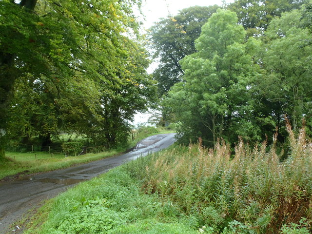 Trees at the end of Blairhall Road