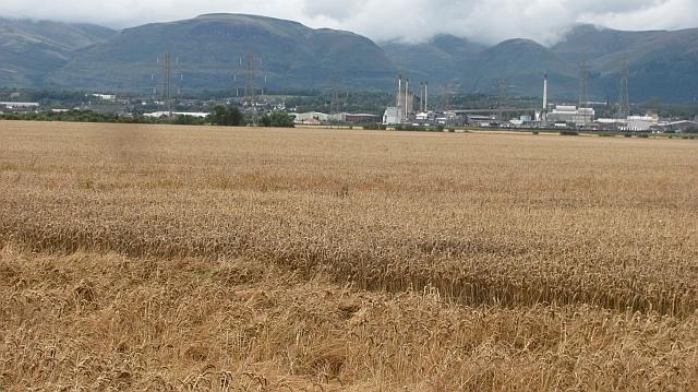 Wheat field, Dunmore
