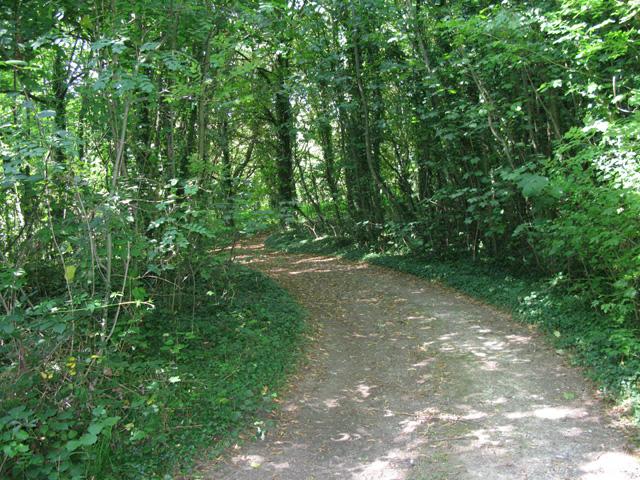 Bridleway through Nightingale Woods