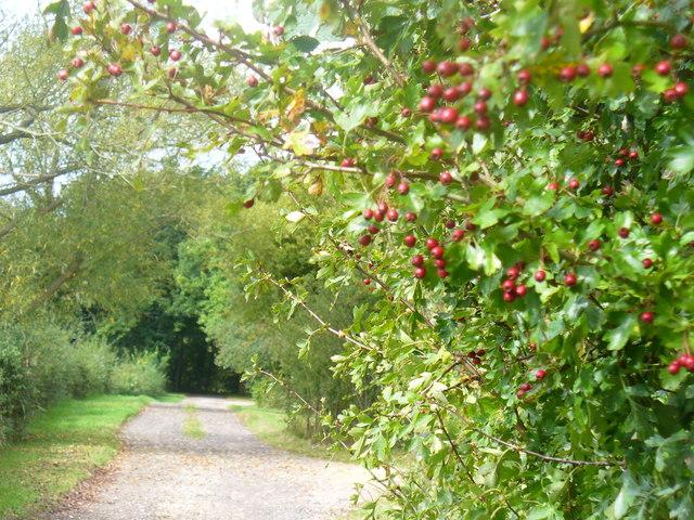 Leafy Lane, Ifold Bridge Lane